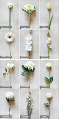 Simple guide to arranging and identifying white flowers for the perfect summer bouquet. We hope to be invited to your brunch table!