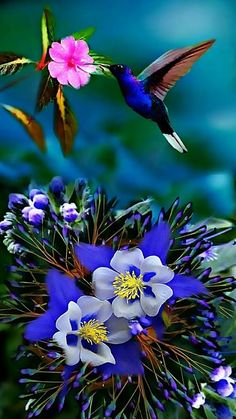 Hummingbird on columbine Beautiful Nature Pictures, Most Beautiful Birds, Beautiful Flowers Wallpapers, Beautiful Nature Wallpaper, Pretty Birds, Beautiful Roses, Amazing Nature, Nature Photos, Beautiful Landscapes