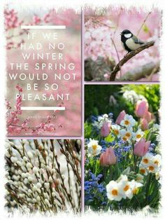 """Pink, """"If we had no Winter the Spring would not be so pleasant"""" mood/color collage Happy Spring, Hello Spring, Spring Is Here, Spring Time, Spring Photography, Photography Flowers, Mood Colors, Color Collage, Beautiful Collage"""
