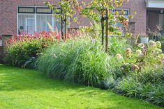 10 siergrassen soorten voor méér rust en eenvoud in de tuin Outdoor Structures, Garden, Flowers, Plants, Google, Garten, Lawn And Garden, Gardens, Plant