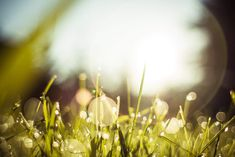 Morning Dew Grass Free Stock Photo Download
