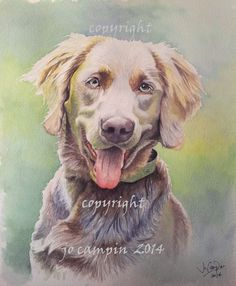 """LH weim, 12"""" watercolour. Commission.  Netherlands"""