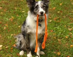 Browse unique items from KaisRuffWear on Etsy, a global marketplace of handmade, vintage and creative goods. Rope Dog Leashes and Collars