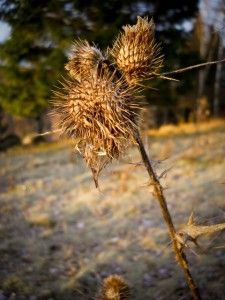 Dead plants give new life (scheduled via http://www.tailwindapp.com?utm_source=pinterest&utm_medium=twpin&utm_content=post12421988&utm_campaign=scheduler_attribution)