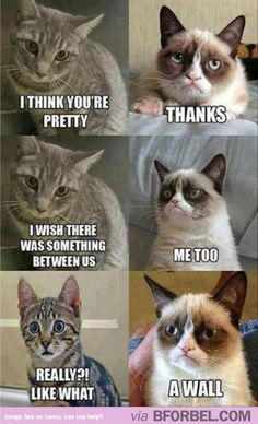 When Grumpy Cat Gets Hit On…