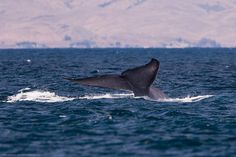 TripBucket - We want You to DREAM BIG! | Dream: See a Blue Whale (the world's largest animal)