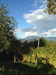 #vigneto #vigna #Veneto #autunno2015 #Prosecco #proseccoSuperiore #bio