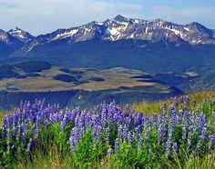 Wildflowers in the San Juan Mountains of Pagosa Springs, #Colorado.