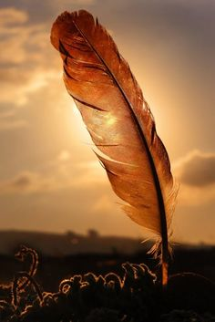 I am a feather for each wind that blows. I let go and trust the universe to carry me.