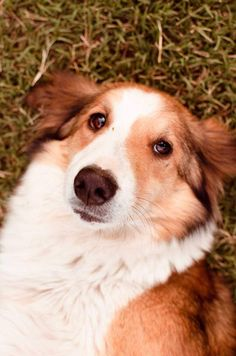 Dogs,Perros,dog,Friends,fotografia,photography. infogabxxs@gmail.com
