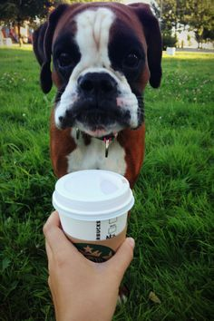 Boxer girl doesn't like Starbucks☕