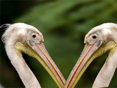 Zoo Birds-Free Love Birds Images Wallpaper