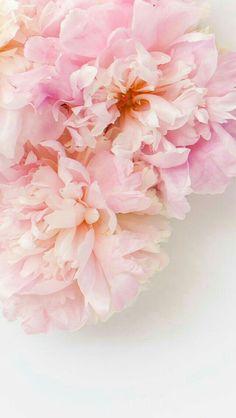 Wallpaperpinkflowers wallpapers pinterest wallpaper flower que imagens para fazer sua capa ou pra outras diversas coisas est mightylinksfo