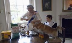 Great picture of The Queen with her Corgis after her Jubilee celebration (picture by Alison Jackson) Guess Royal Corgis eat at the table - and dig those fabulous dishes! Windsor, Commonwealth, Corgi Dog, Dachshund, Prinz Philip, Queen Pictures, Her Majesty The Queen, Pembroke Welsh Corgi, Save The Queen