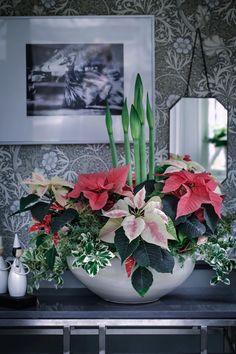 Christmas Vases, Christmas Garden, Christmas Centerpieces, Christmas Projects, Christmas Decorations, Christmas Feeling, Christmas Time, Xmas, Winter Wonderland Christmas