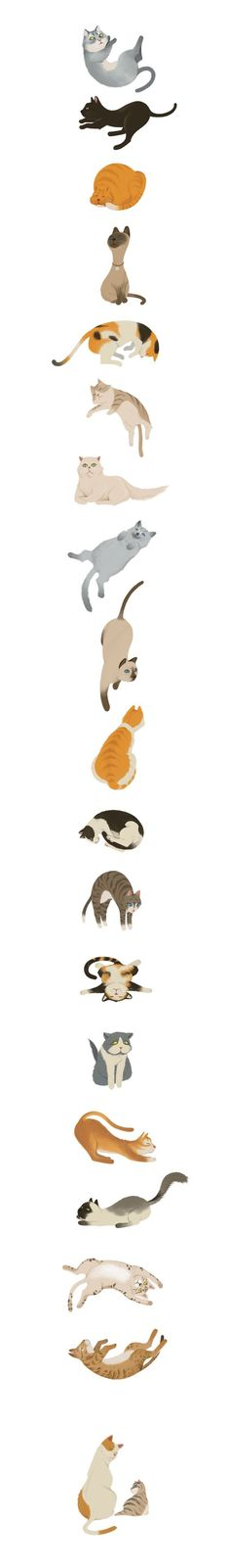 (1) Cats by Wonho Jung, via Behance | For The Love Of Cats | Pinterest