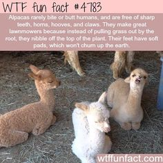 """52.4k Likes, 965 Comments - WTF FUN FACTS. (@wtffunfacts) on Instagram: """"#wtffunfacts"""""""