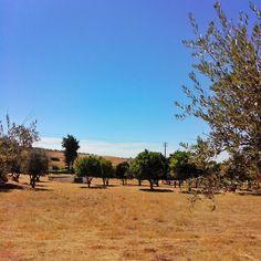 Viagens no Meu País #portugal #alentejo #portugaldenorteasul #igersportugal #herdadedamalhadinhanova #traveler #countryside #checkmytrips #makeyousmilestyle #vsco #borba #decor #ruralchic #ig_worldclub #vscogrid #ig_portugal #travel #lifestyle #travelgram #viajar #traveller #vinho #instagood #amar_alentejo #autumn #nature #cityguides #tourism