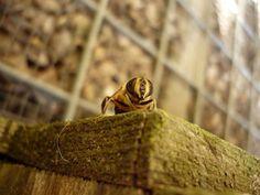 In onze tuin op houten kistje
