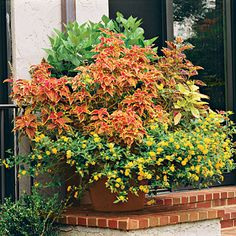 Coleus & Lantana - Spectacular Container Gardening Ideas - Southern Living