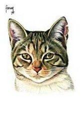 Postkaarten    Kop van Miepje    Francien Westering, van    C9065    Postkaarten, Tekeningen, Dieren, Katten,