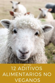 3 Ways Christians Are Like Sheep - Faith to Finance Sheep Names, Homemade French Bread, Eggs For Sale, Meat Rabbits, Funny Sheep, Most Popular Names, Egg Incubator, Natural Toothpaste, Funny Names