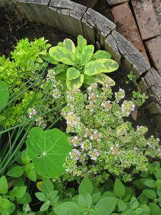 herb garden barrel - I like this. Repin!