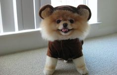 25 Animals Dressed as Other Animals
