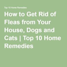How To Get Rid Of Fleas In A Dog Pen