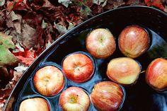 #Autumn #Photo  Fine Art Photography apples leaves by kimfearheiley, $15.00 #apples #samhain