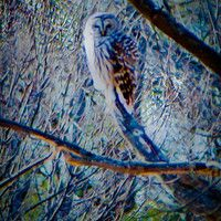 Evening Owl Song by MotherTurtle on SoundCloud