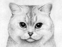 Как рисовать кошек карандашом поэтапно