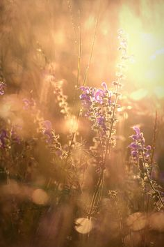 Nature Aesthetic, Flower Aesthetic, Creative Photography, Nature Photography, Cool Pictures, Beautiful Pictures, Vintage Flowers, Floral Flowers, Life Is Beautiful