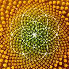 Image result for how to draw the inside of a sunflower