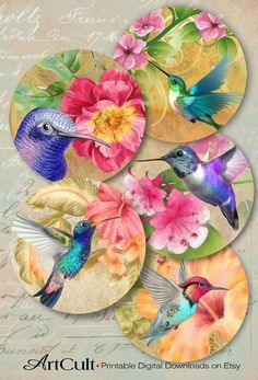 Printable obtain HUMMINGBIRDS, inch dimension pictures Digital Collage Sheet for Pocket Mirrors cupcake toppers Paper Weights Present tags Arts And Crafts Projects, Diy And Crafts, Paper Crafts, Recycled Cd Crafts, Easy Crafts, Art Colibri, Hummingbird Art, Cd Art, Collage Sheet