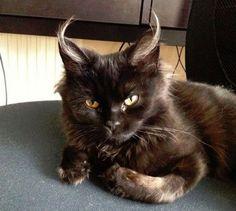 【魔界猫】小悪魔どころじゃない!! 魔界から来たようなニャンコが激写される | ロケットニュース24