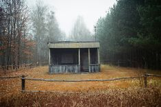 abandoned, analog, autumn, forest, house, mistery, trees, wooden