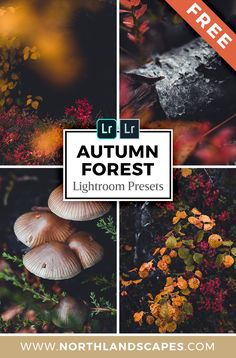 Use these 5 Adobe Lightroom presets to give your autumn landscapes a dreamy and warm look and really make the beautiful leaves stand out. The emphasis is on highlighting the yellow and orange tones of the forest vegetation and adding a slightly faded look Lightroom Gratis, Lightroom Presets, Photoshop Presets Free, Autumn Photography, Photography Tips, Travel Photography, Lightroom Tutorial, Autumn Forest, Forest Landscape