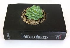 book planter w/ succulent and pebbles $50.00