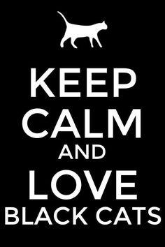 Love Black Cats