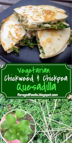 Vegetarian chickweed and chickpea quesadillas: under 400 calories, and each with a full serving of vegetables. Wildcrafted meals made from foraged ingredients, from the ForagedFoodie