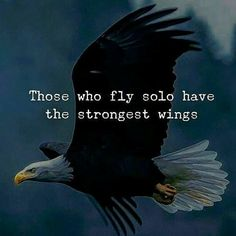 Those who fly solo have the strongest wings life quotes quotes quote life life lessons motivational quotes quotes and sayings life goals quotes to live by Fly Quotes, Wisdom Quotes, True Quotes, Words Quotes, Quotes To Live By, Best Quotes, Motivational Quotes, Inspirational Quotes, Qoutes