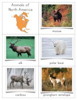 The Helpful Garden: Animals of North America Cards. This is educational website using the Montessori method. Learning activities and printouts Montessori Education, Montessori Activities, Learning Activities, Teaching Ideas, Canadian Animals, North American Animals, Geography Lessons, World Geography, Preschool At Home