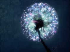 Make a wish ✺