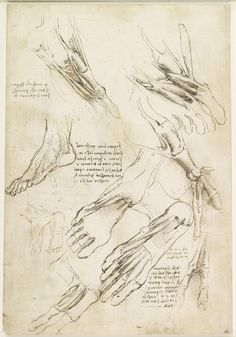 Recto: The muscles of the leg, and the intercostal muscles. Verso: The muscles of the foot | Royal Collection Trust