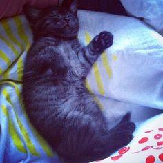 Немного кота не повредит!#котики #кот  #котспит #мяу #ванильно #длядевочек