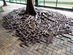 9 10 Tree, Tree Roots, Plantation, Unique Trees, Science And Nature, Fauna, Tree Art, Trees To Plant, Tree Of Life