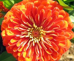 orange  luster  floral by paradisereal on Etsy, $18.00