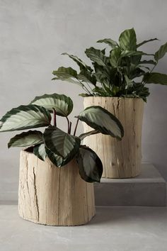 Ojai Garden Pot - #anthropologie.com #AnthroFave