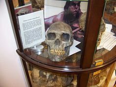 The world's only cryptozoology museum is located at Thompson's Point in Portland, Maine Cryptozoology Museum, Downtown Portland, Bigfoot, Pretty Cool, Maine, Weird, Guy, Creatures, United States